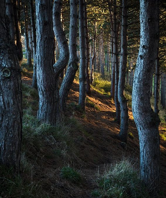 Forest late afternoon