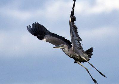 Takeoff for landing