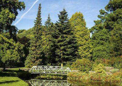 Botanic Garden Reflection