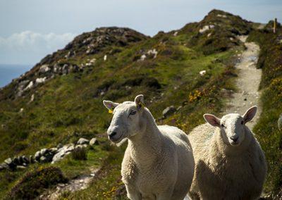 Sheep's Head, Co. Cork