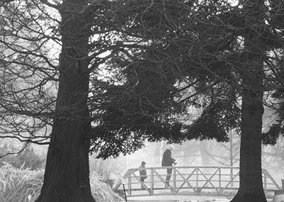 Winter Walk, Botanic Gardens