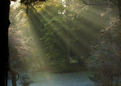 Sunbeams on a frosty morning