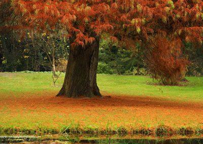 Autumn in Botanic Gardens