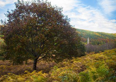 Glendalough Autumn Colours