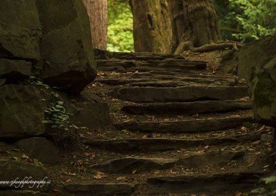 Autumn Steps