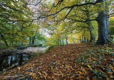 River Liffey, Newbridge